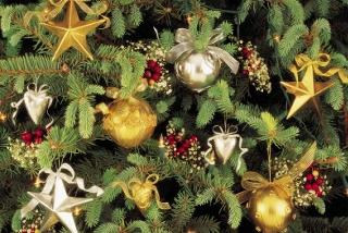 Splendid Tree Trimmings