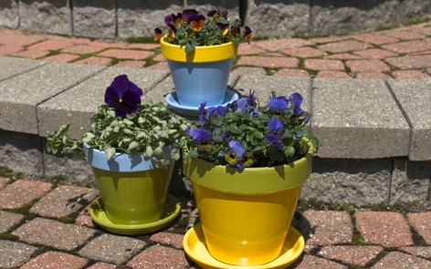 Fabulous Flower Pots Project