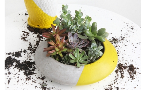Colorblock Sunny Succulent Garden Project